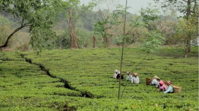Tea garden women workers copy